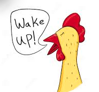 Wake up chicken