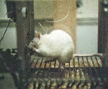 Skinner Rat2