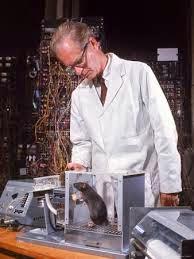 Skinner lab rat