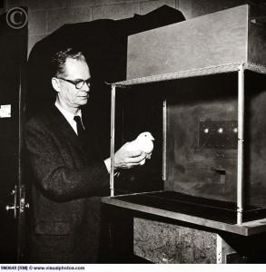 Skinner pigeon box