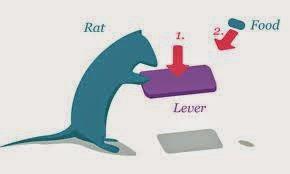 Skinner rat push
