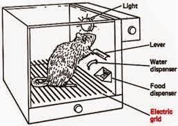rat psychology