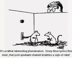 rat psychology2