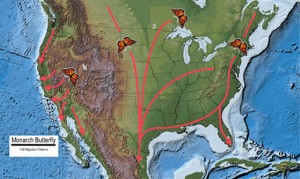 Monarch Butterfly Fall Migration Patterns. Base map source: USGS National Atlas.
