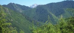 washington-forest-dnr-630x286