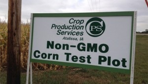 GMO-Corn-Test-Plot