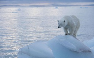 "The ""vanishing"" of polar ice (and the polar bears) has become a poster-child for warmists. Photo: ALAMY"