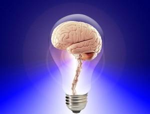 Brain-Public-Domain-300x229