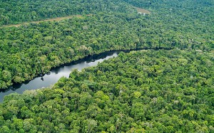 LAGO PRETO LAKE an oxbow lake in Lago Preto Conservation Concession Amazonian Rainforest Yavari Valley Loreto Peru